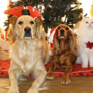 Eco Dogs and Cats Virtual Gift Card Certificate