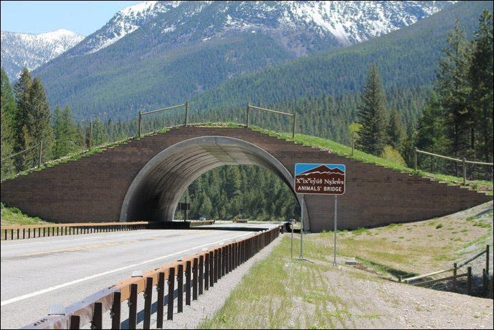 Wildlife overpass on the Flathead Indian Reservation in Montana, USA. Image via The World Geography.